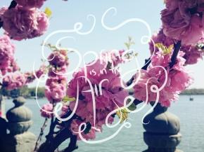 Beijing 2014: A Springtime Story (PartIII)