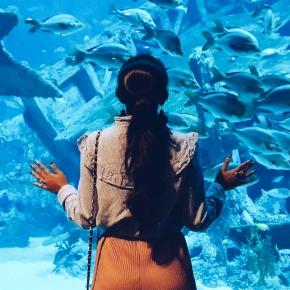 S.E.A. Aquarium at Resorts WorldSentosa